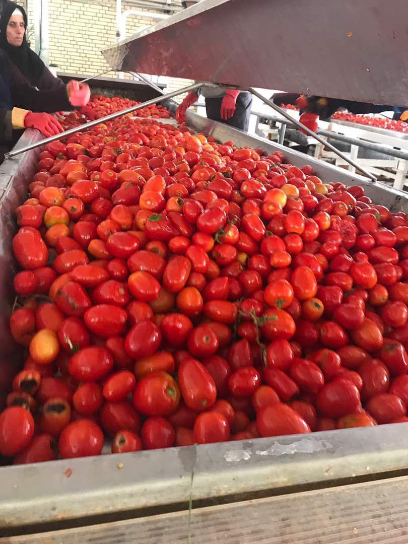 خرید انواع رب گوجه