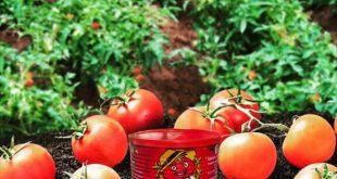 رب گوجه فرنگی 800 گرمی چی چی لاس